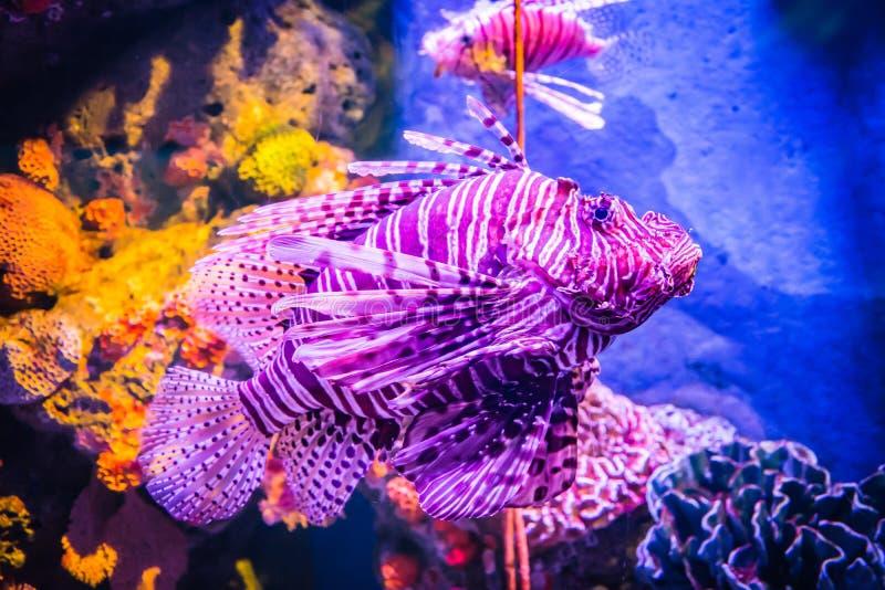 Overzees vissen en koraal royalty-vrije stock afbeeldingen