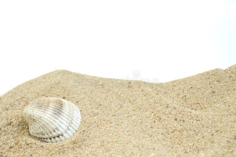 Overzees zand met resten van shells en pebbleson witte achtergrond Concept rust Hoogste mening stock afbeeldingen