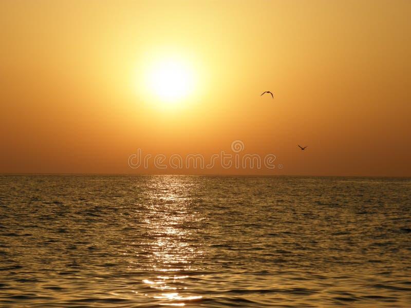 Overzees, zonsondergang en zeemeeuwen stock afbeelding