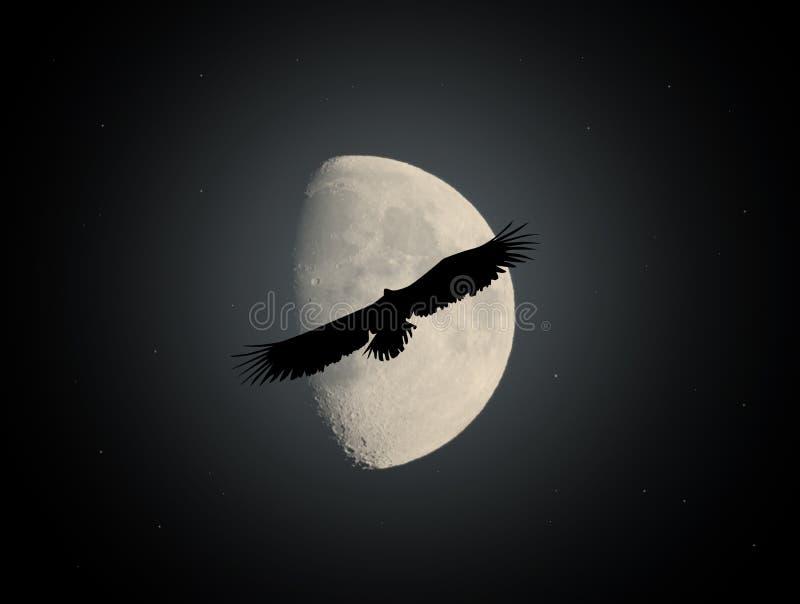 Overzeese adelaar in het maanlicht royalty-vrije illustratie