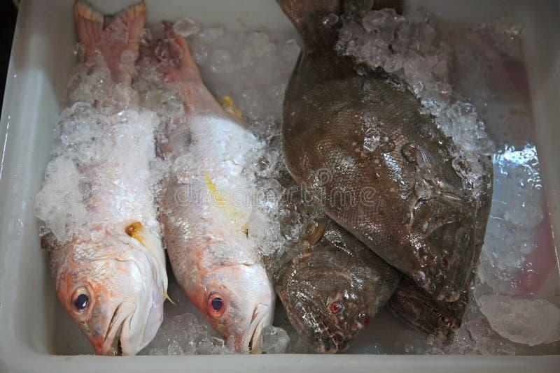 Download Overzeese Baarzen En Spaanse Makreel Stock Afbeelding - Afbeelding bestaande uit restaurant, oceaan: 54080857