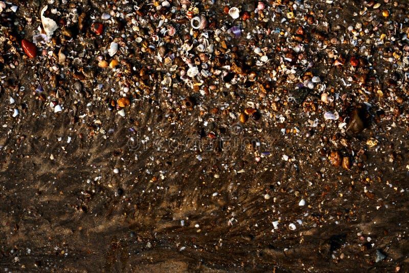 Overzeese die kust met shells en andere dingen wordt gevuld stock fotografie