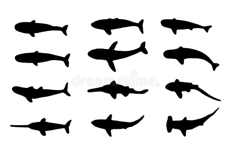 Overzeese dieren (haaien en walvissen) stock afbeeldingen