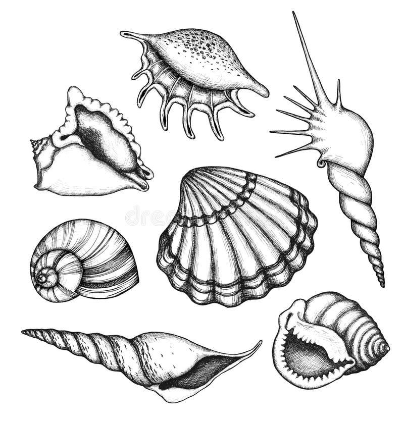 Overzeese geplaatst shells vector illustratie