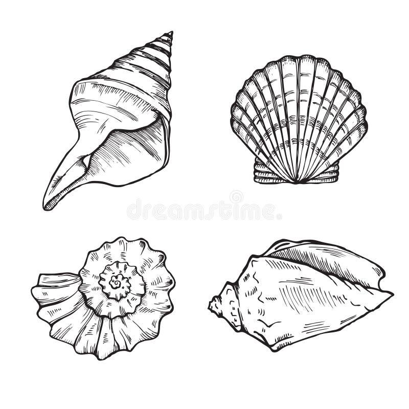 Overzeese geplaatst shells stock illustratie