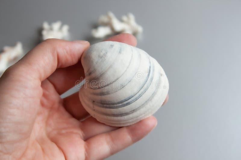Overzeese in hand shell royalty-vrije stock afbeeldingen