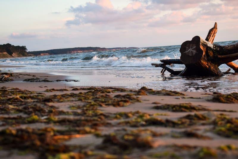 Overzeese kust met oud hout en zeewier in Jurkalne royalty-vrije stock afbeeldingen