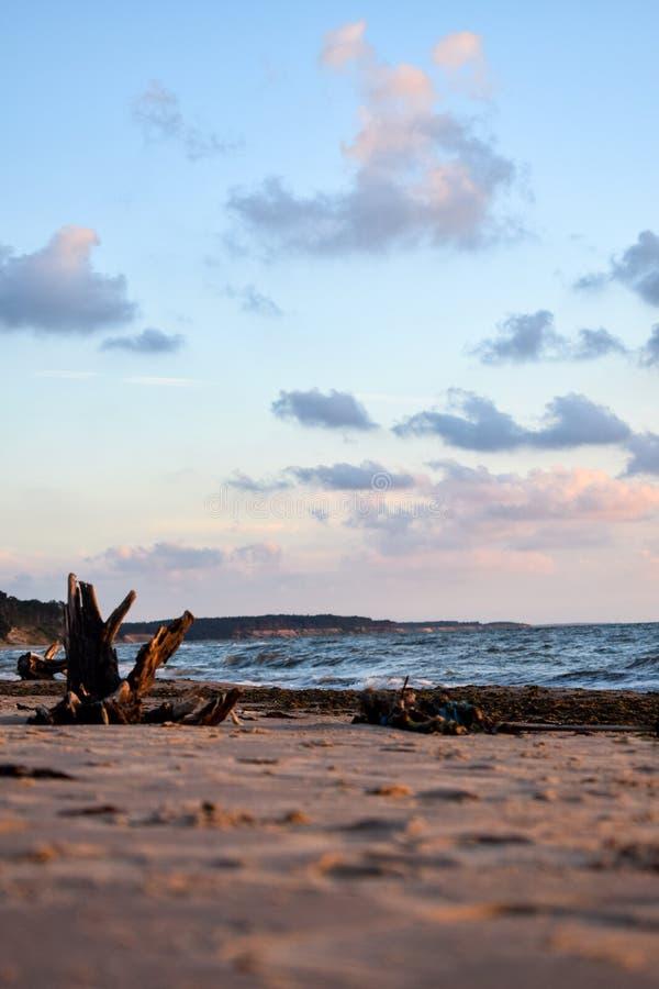 Overzeese kust met oud hout in Jurkalne stock foto