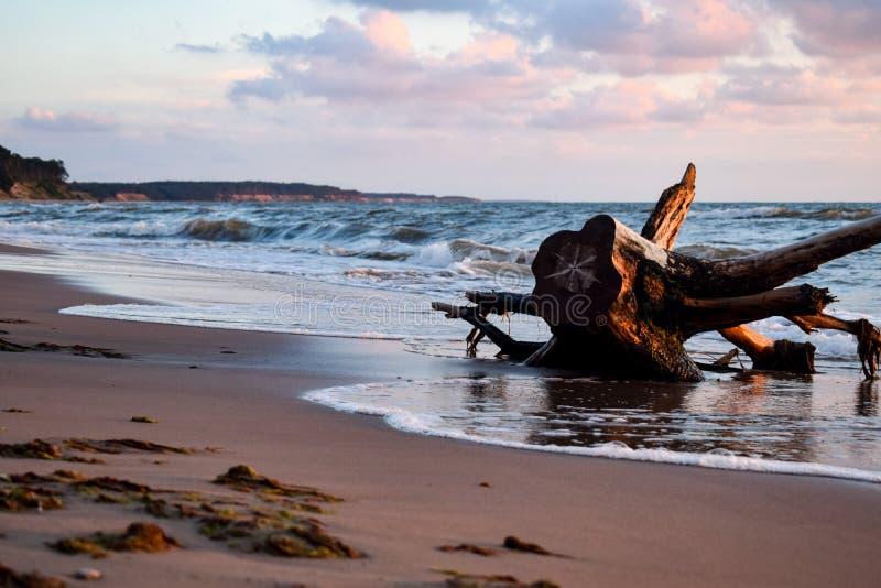 Overzeese kust met oud hout in Jurkalne-strand stock afbeeldingen