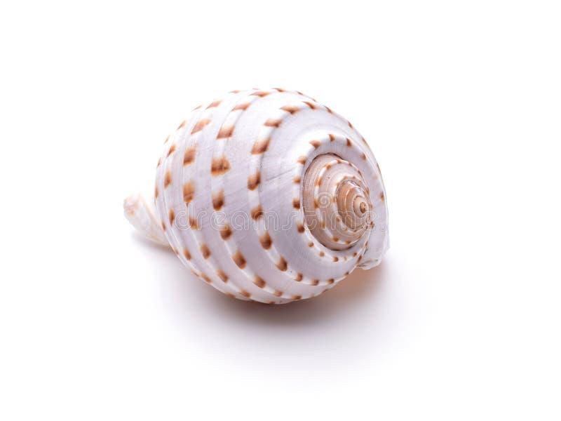 Overzeese natuurlijke shell, origineel patroon van het mariene leven royalty-vrije illustratie