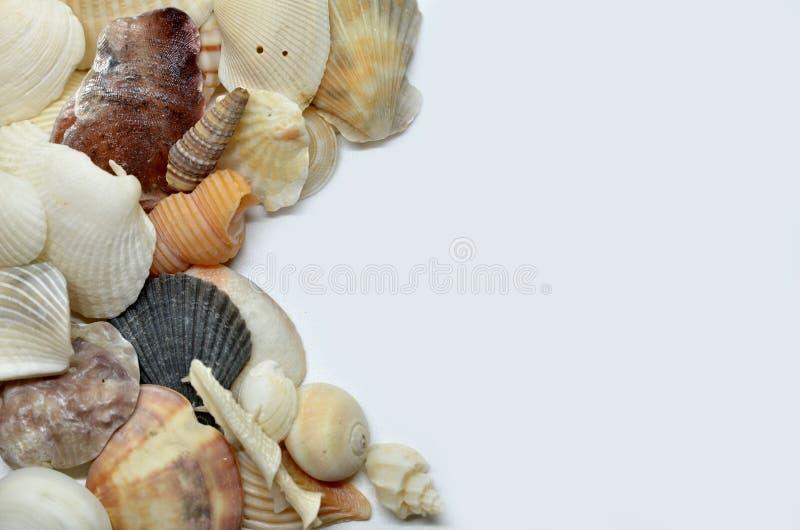 Overzeese samen geschaafd shells royalty-vrije stock foto