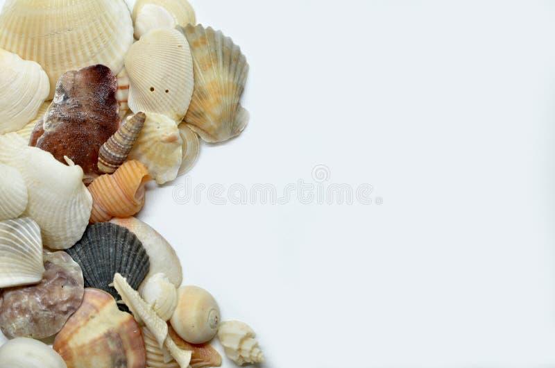 Overzeese samen geschaafd shells royalty-vrije stock afbeeldingen