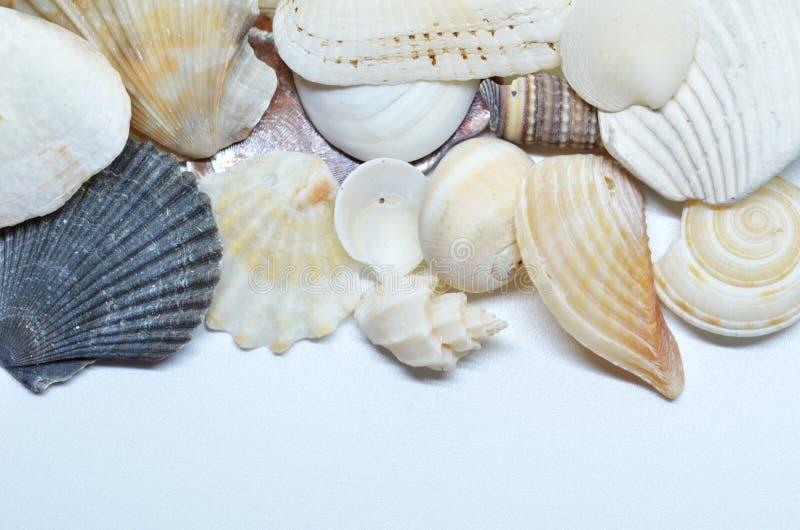 Overzeese samen geschaafd shells stock afbeeldingen