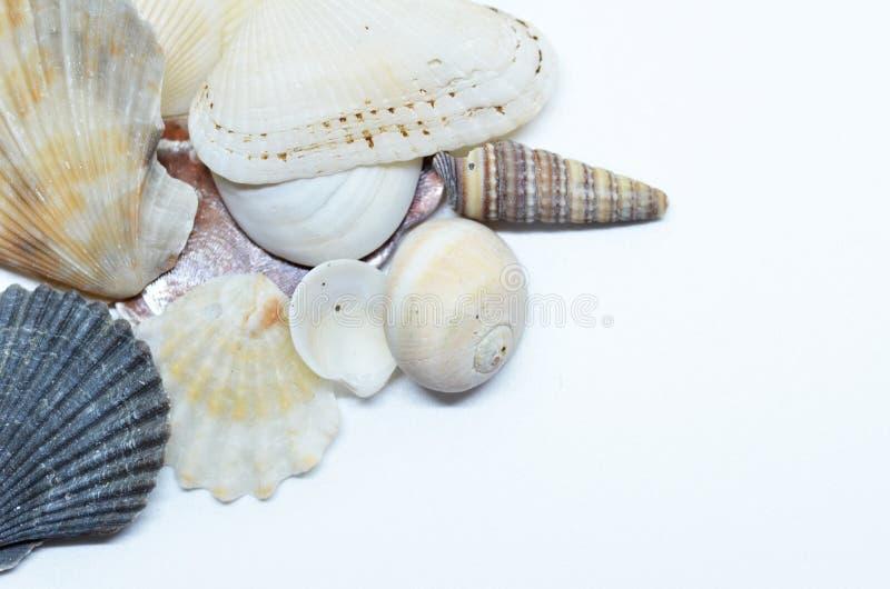 Overzeese samen geschaafd shells stock afbeelding