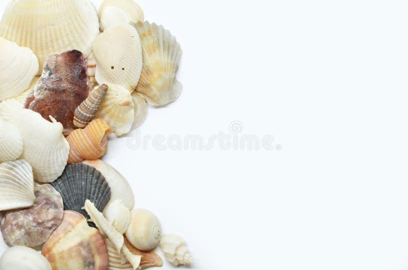 Overzeese samen geschaafd shells stock foto's