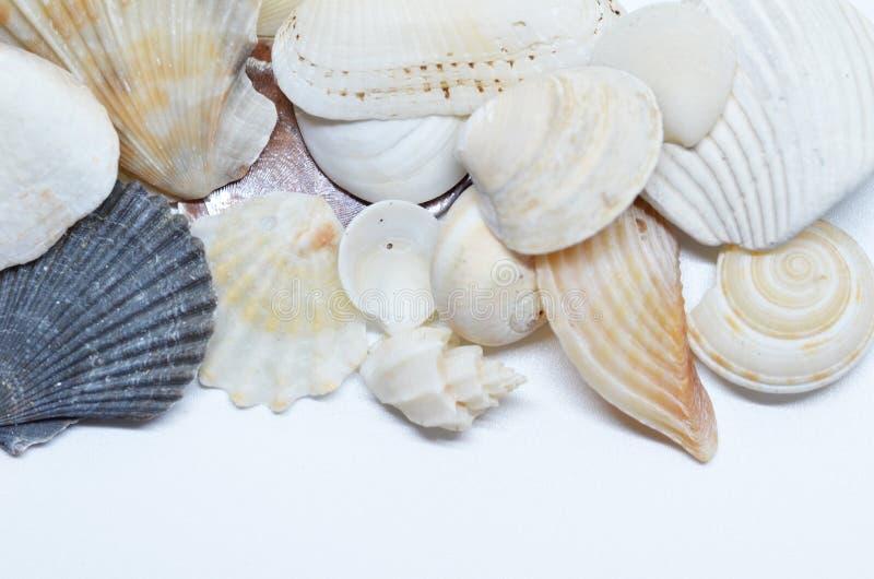 Overzeese samen geschaafd shells royalty-vrije stock foto's