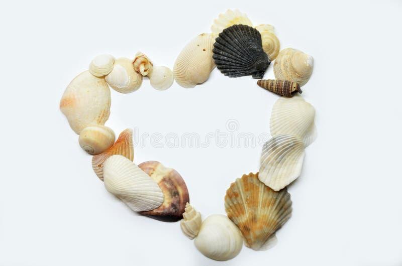 Overzeese samen geschaafd shells stock foto