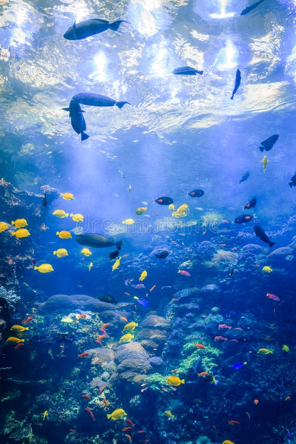 Overzeese schepselen bij het aquarium de V.S. van Georgië met scuba-duikers in tank royalty-vrije stock afbeelding