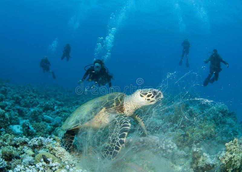 Overzeese Schildpad met scuba-duikers stock fotografie