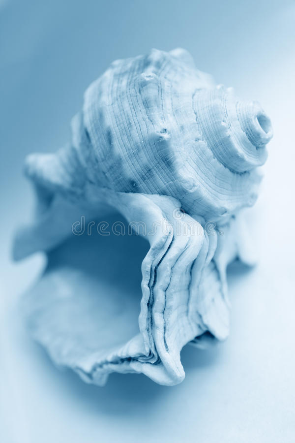 Overzeese shell stock foto's