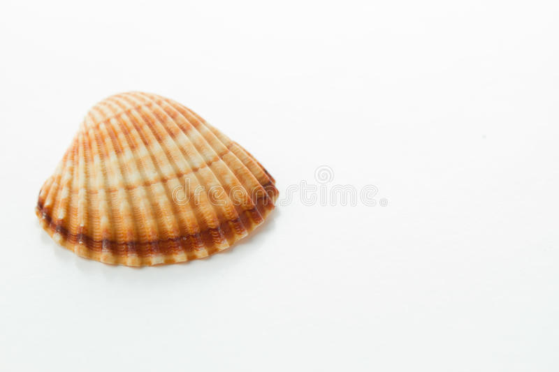 Overzeese shell royalty-vrije stock fotografie