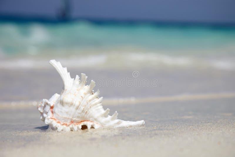 Overzeese shell dichtbij met oceaan stock afbeeldingen