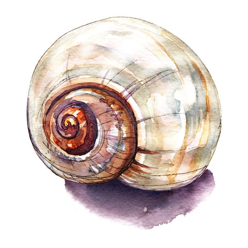 Overzeese shell die op wit wordt geïsoleerda vector illustratie
