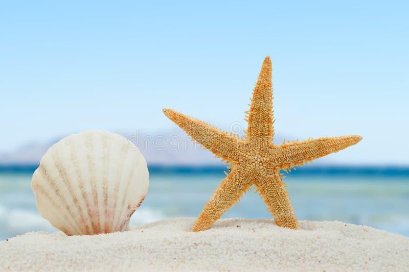 Overzeese shell en zeester op het strand stock foto