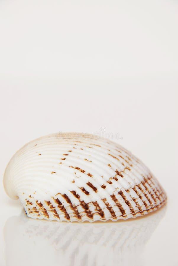 Overzeese shell, het mooie oceaanleven van Andaman, Thailand stock foto's