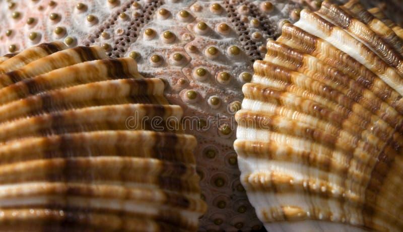 Overzeese Shell Inzameling stock afbeeldingen