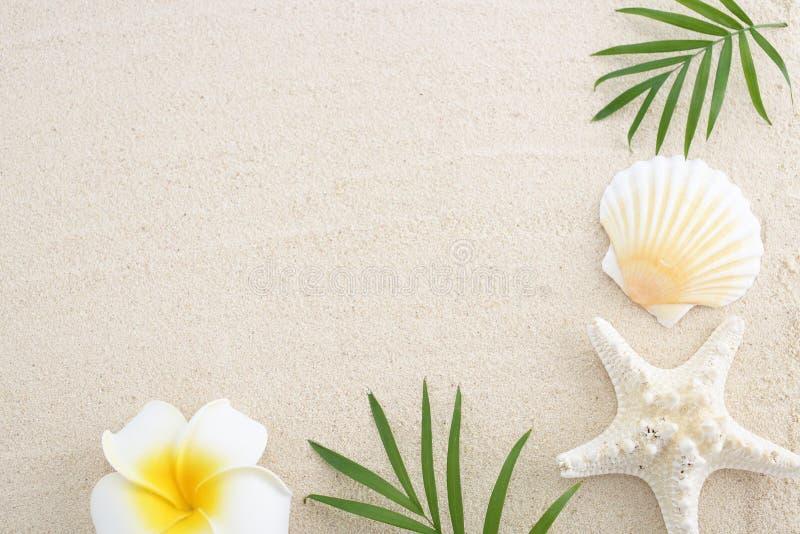 overzeese shell met zand stock afbeelding