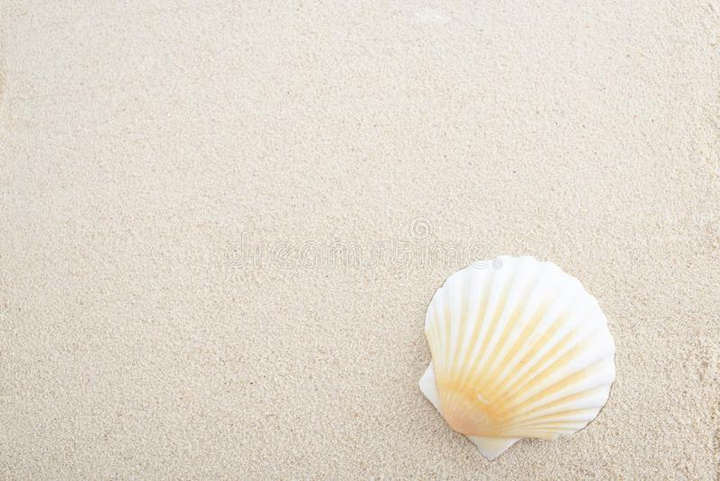 overzeese shell met zand royalty-vrije stock afbeelding