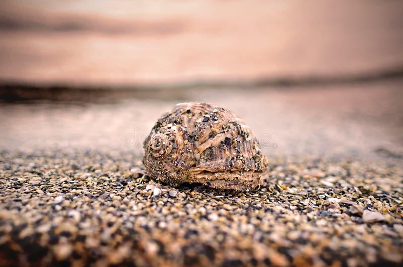 Overzeese Shell Op De Kust Stock Fotografie
