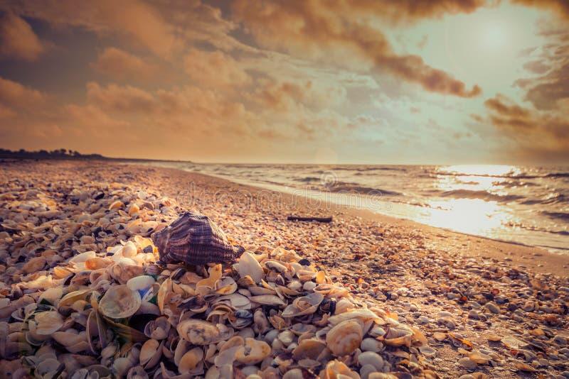 Overzeese shell op een strand in het ochtendlicht stock afbeeldingen