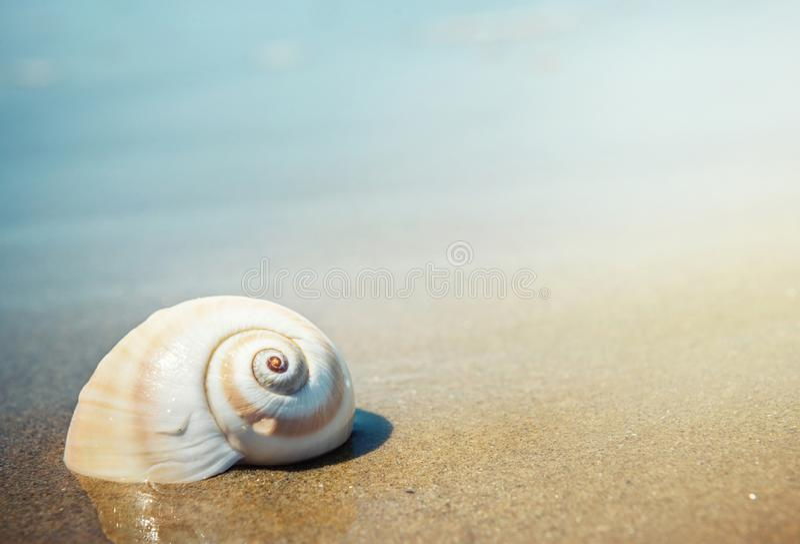 Overzeese shell op het overzees en de zandige strand vage achtergrond Schrijf Y royalty-vrije stock afbeeldingen