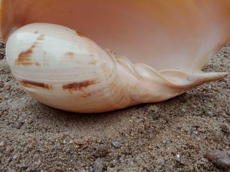 Overzeese shell op het zand geweven behang als achtergrond, royalty-vrije stock afbeelding