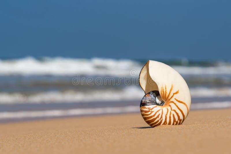 Overzeese shell op het zandige strand op tropisch eiland royalty-vrije stock afbeelding