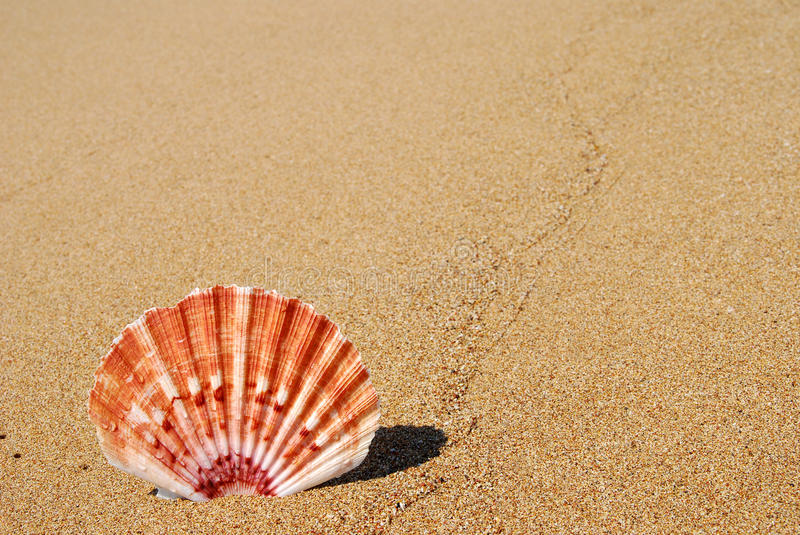 Overzeese shell op zand stock foto's