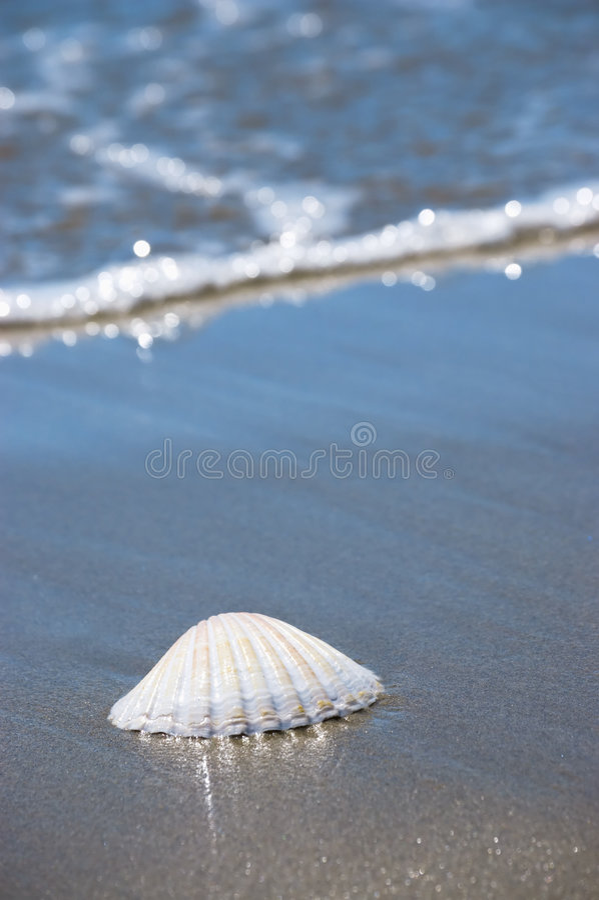 Overzeese shell op zand stock afbeeldingen