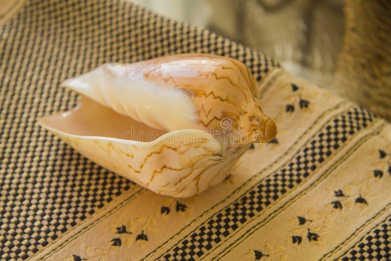 Overzeese shell over textielachtergrond stock afbeeldingen