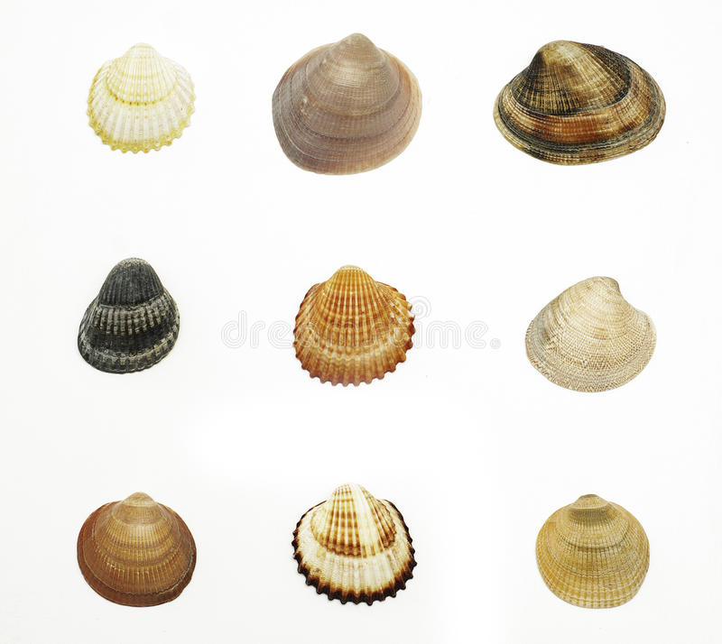 Overzeese shells royalty-vrije stock fotografie