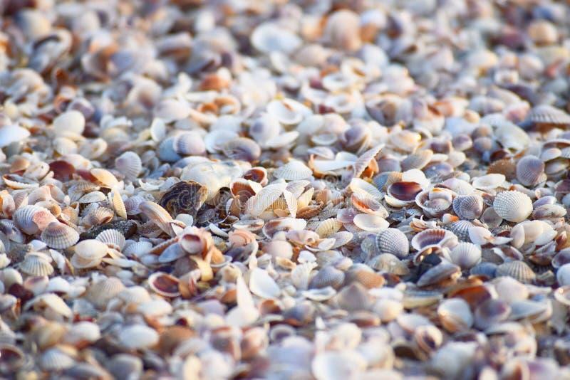Overzeese Shells - Abstracte Marine Background stock afbeeldingen