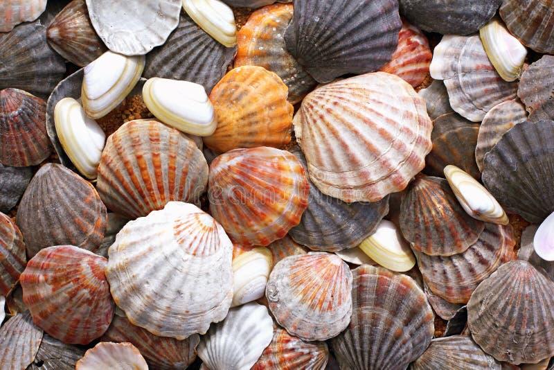 Overzeese shells achtergrond royalty-vrije stock foto