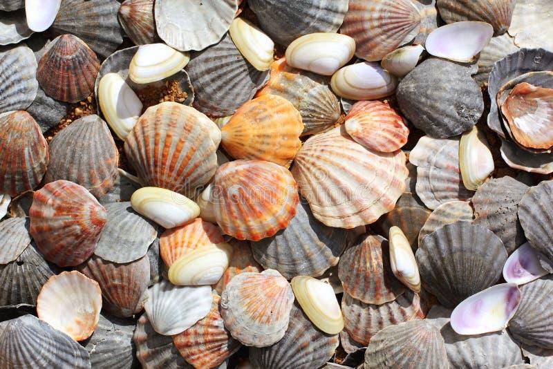 Overzeese shells achtergrond stock foto