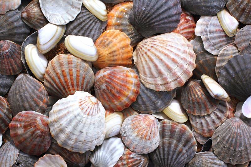 Overzeese shells achtergrond stock afbeelding