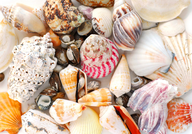 Overzeese shells achtergrond royalty-vrije stock afbeelding