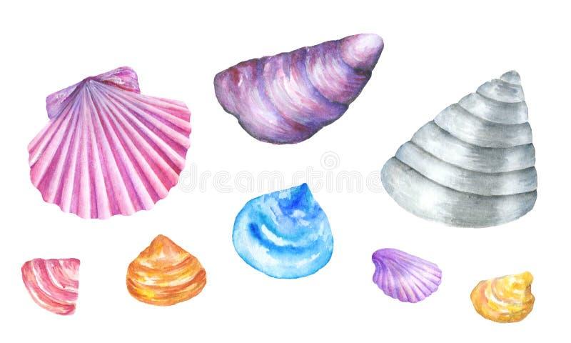 Overzeese shells De illustratie van de waterverf royalty-vrije illustratie