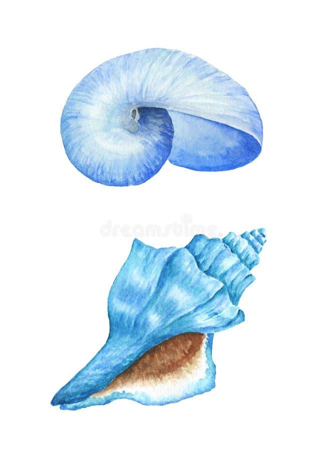 Overzeese shells De illustratie van de waterverf vector illustratie