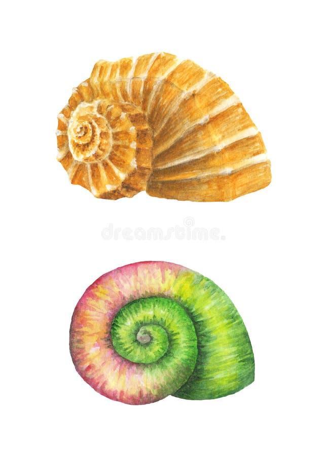 Overzeese shells De illustratie van de waterverf royalty-vrije stock foto's