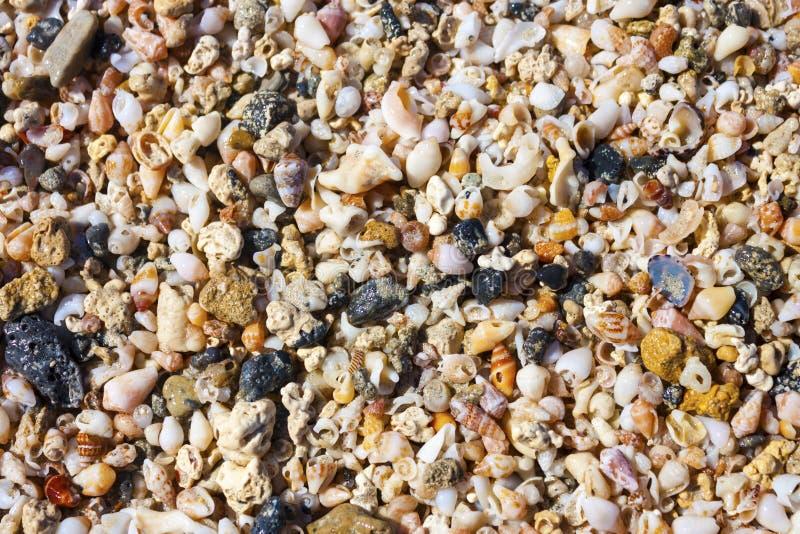 Overzeese shells en kiezelstenen op het strand stock afbeelding